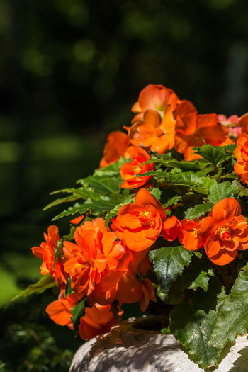 Orange Red Beauty In Nature Blooming Close-up Day Flower Flower Head Fragility Freshness Growth Marigold Nature No People Orange Flower Outdoors Petal Plant Red Flower Water