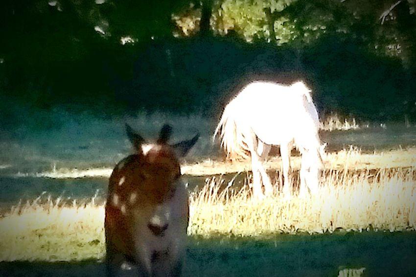 L'âne et la Belle
