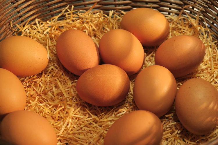 Hay Straw Organic Farm Animal Nest Protein Animal Egg Nest Bird Nest Hay Bale Farmland Stork Bale  Eggshell Haystack Stalk White Stork Nest Egg Young Bird Robin Farm Robin Egg Yolk Egg Yolk Eggcup Egg White Egg Carton Egg Carton Easter Egg Plantation Boiled Egg HUAWEI Photo Award: After Dark Moments Of Happiness It's About The Journey EyeEmNewHere 2018 In One Photograph The Minimalist - 2019 EyeEm Awards The Traveler - 2019 EyeEm Awards The Street Photographer - 2019 EyeEm Awards The Foodie - 2019 EyeEm Awards The Great Outdoors - 2019 EyeEm Awards My Best Photo