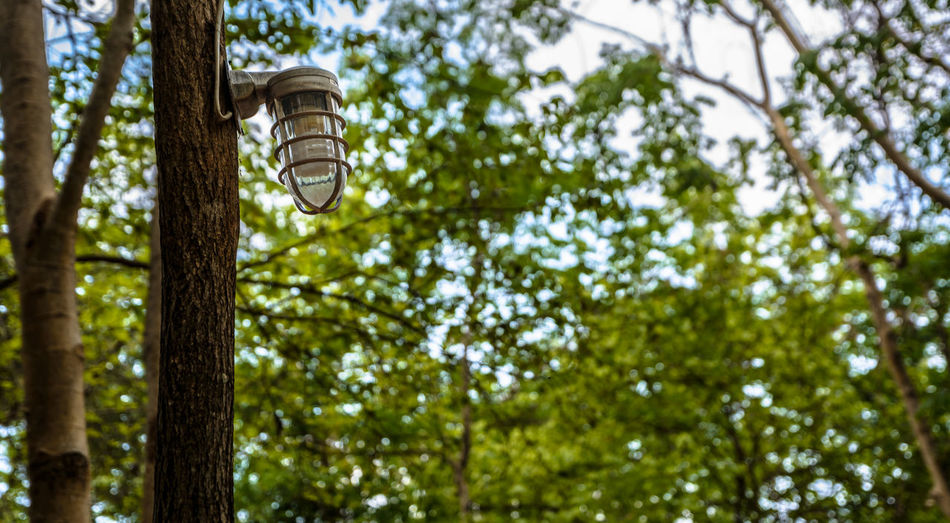 Lamp on tree in the garden. Darkness Decor Green Green Color Lantern Leaves🌿 Light Public Park. Thailand. Tree Electric Light Forest Forest Trees Garden Gleam Lamp Light Bulb Lighting Modern Lamp Outdoor Park Sun Tall Technology Vintage Wooden