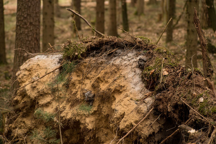 In the forest Nature WoodLand Damaged By Wind  Day Devastation Forest Forest Photography No People Outdoors Podsolnyhi Soil