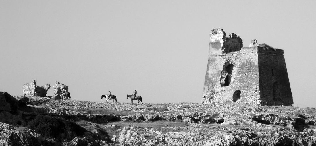 Blackandwhite Gargano Horses Italia Italy Monochrome Puglia Tower The Great Outdoors - 2016 EyeEm Awards