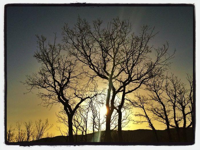 1h De Paseo En El Bosque Antes De Trabajar. #valledellozoya #bosque #forest #nature #amanecer #sunrise #lights #beforework