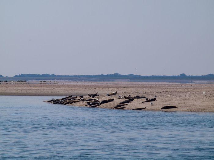 Seals are