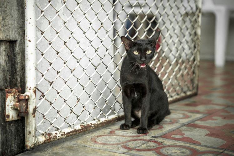Portrait Of Cat Sitting Near Metal Gate
