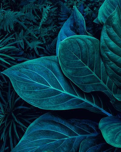 Full frame of green leaves texture background.