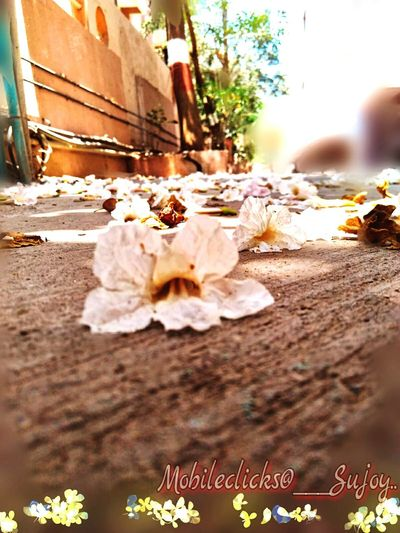 Live the life of a flower... It resist ti loose it's Charm even after a fall.. Fall Season Flowers, Nature And Beauty Flower On Floor Resist The Street Photographer - 2017 EyeEm Awards