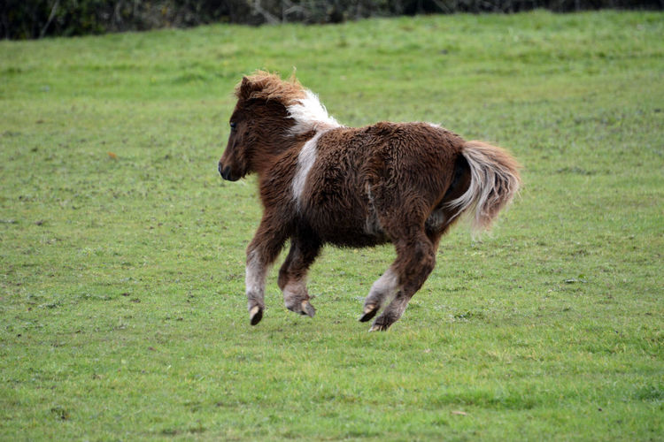 Close-up of horse running on field