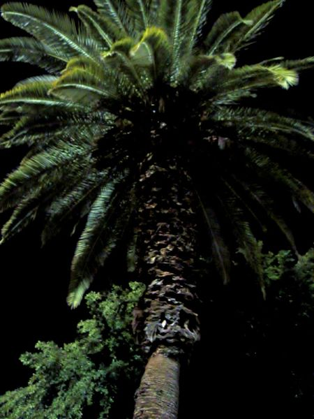 Colours Of Early Spring Dark Night May Nature Night Mood No People Palm Tree Warmly