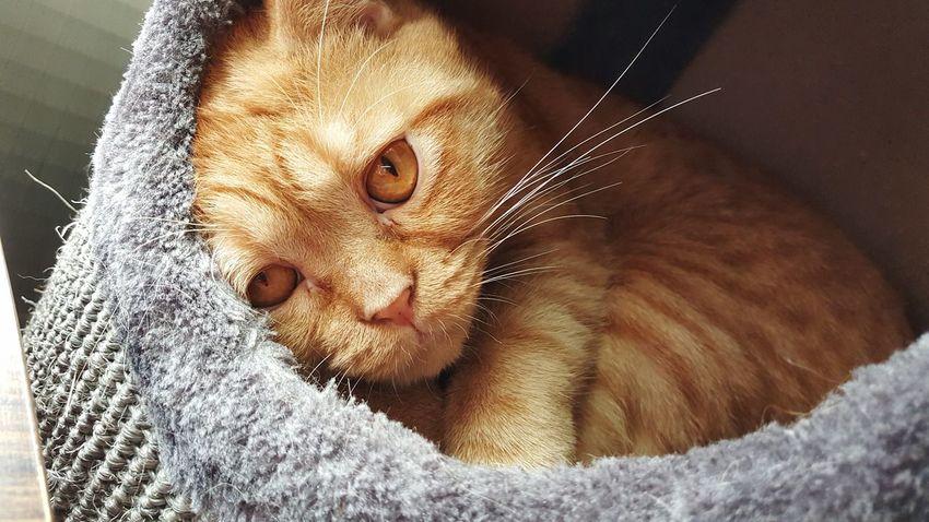 EyeEmNewHere Focus Catboy Wish EyeEmNewHere