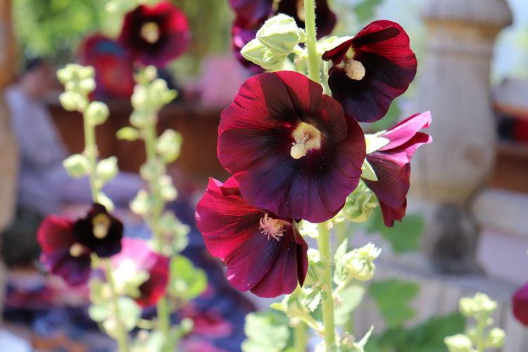 Kashmir Flower