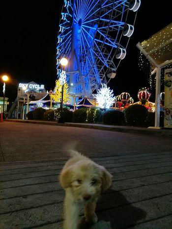 Ferris Wheel Outdoors Animalislove MeetTheFlash Phoneography Animal Lover Scenics Savethedogs