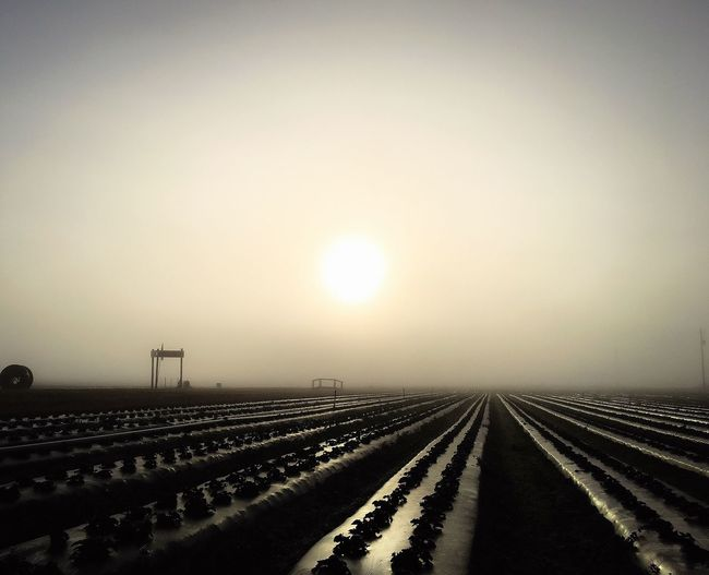 Farm Morning Mist Fog Outdoors Nature Sky Scenics Landscape Sunrise Spring Rural Scene Taking Photos Quiet Moments Strawberry Tranquility Field Trespassing