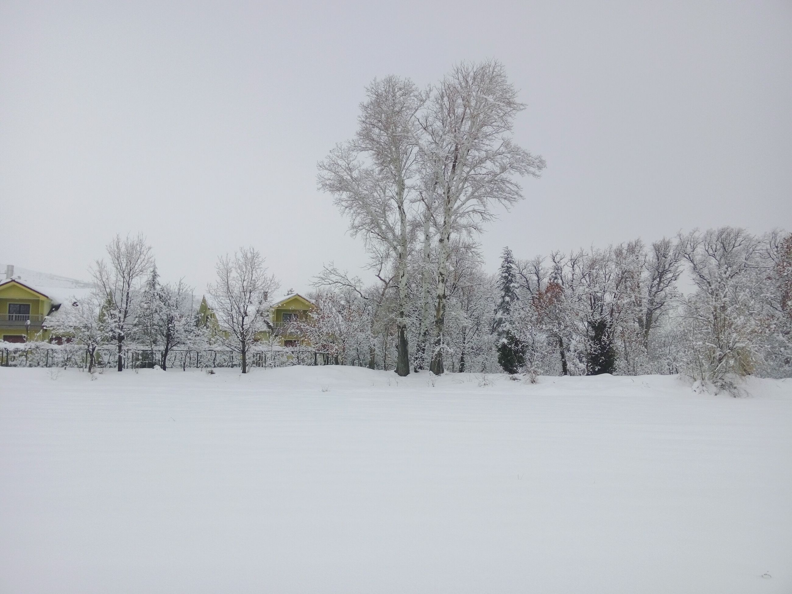 tree, winter, snow, cold temperature, nature, no people, tranquility, growth, outdoors, day, beauty in nature, tranquil scene, clear sky, sky, scenics, landscape, snowing