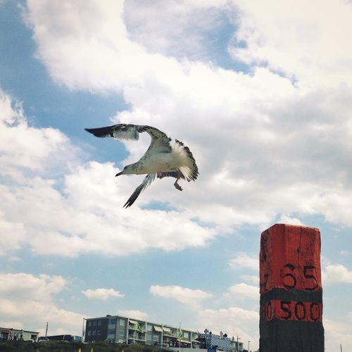 Capture The Moment The Freedom Of Flying Seagull Flying Adapted To The City