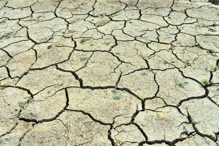 ]no rain, no water, drought, cracked soil Background Background Wallpaper Cracked Soil Dry Cracked Rice Paddy Field In Summer Dry Cracked Rice Paddy Field Soil In Hot Sun Dry Mud Footprints Dry Soil Dry Soil Background