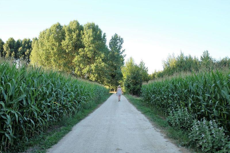 Rear view of woman walking on road amidst plants on field against sky