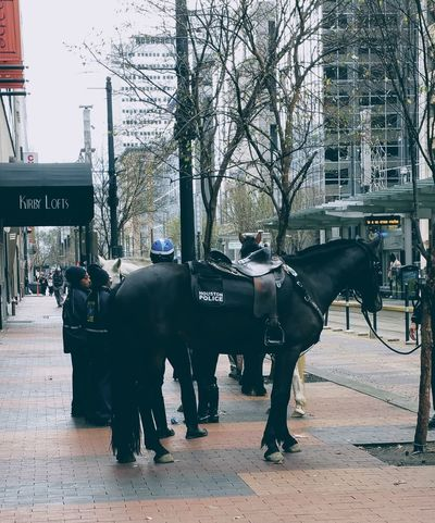 The Street Photographer - 2017 EyeEm Awards Horse Domestic Animals Animal Themes Mammal Full Length Day Outdoors No People City Tree Popular Photos Downtown Photos On The Street Houston Texas Downtown District Police Horse