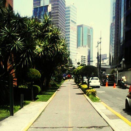Tarde bonita entre edificios y naturaleza... Polanco Work Postcardsfrommexicocity Cdmx Street