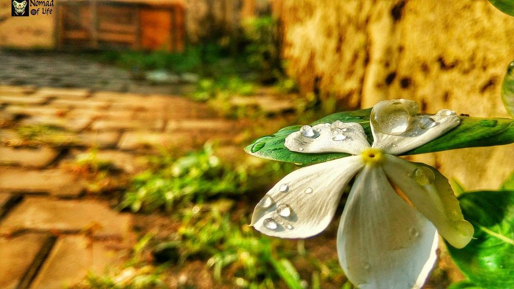 In the morning dew 🇮🇳 One Animal Animals In The Wild Animal Themes Insect Animal Wildlife Outdoors Nature Focus On Foreground Day Close-up Green Color No People Plant Leaf Beauty In Nature Fragility Beauty In Nature Freshness Nomad EyeEm Motorcycle Photography Highwayphotography Photography Eyeemphotography Nature Beauty