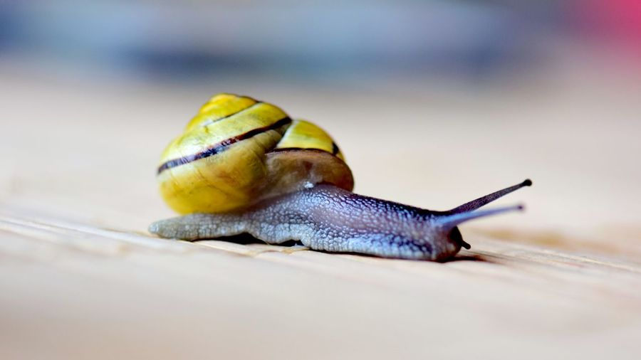 Close-up of snail on place mat