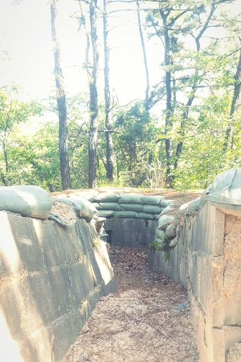 bunkers along the hike, about 60 miles from North Korea Bunker Military Trench Korea Nature Korean Culture Border Hiking Hikingadventures Hiking Trail Hiking Adventures Outdoors Outdoor Photography Trees Colors Tree
