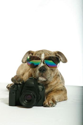 Close-up of a dog wearing sunglasses