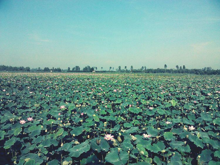 Lotus First Eyeem Photo