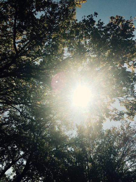 Streaming Sun rays Trees And Sky Enjoying Life Day Daytime Sunlight Happy No People Warmth Clear Sky Beauty In Nature Daytime Photography Streaking Light Streaming Light Leaves