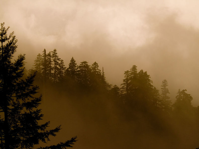 Beauty In Nature Fir Trees Forrest Photography Landscape Misty Remote Spooky Tranquil Scene Tranquility Weather Weather