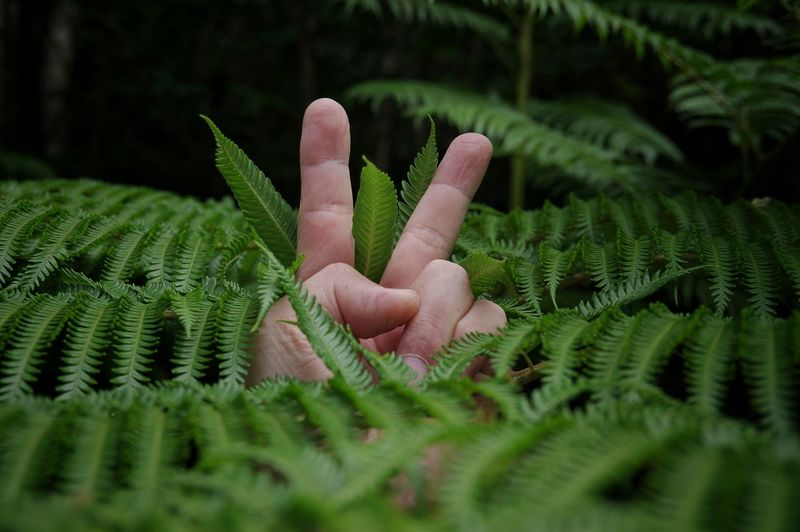 Close-up of hand showing peace sign amidst green plants