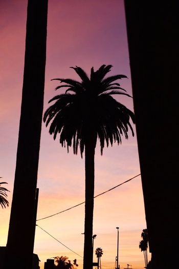 Low angle view of silhouette palm trees against sky