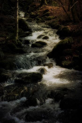 Herbststimmung im Schwarzwald. Mystic World Of Nature Mystic Black Forest EyeEm Best Shots Atmospheric Mood Waterfall Water Nature Motion No People Beauty In Nature Land Tranquility Scenics - Nature Outdoors Flowing Water Flowing Tranquil Scene Tree Full Frame