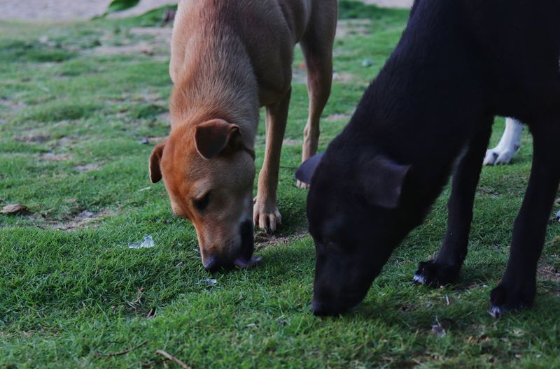 Two dogs on field