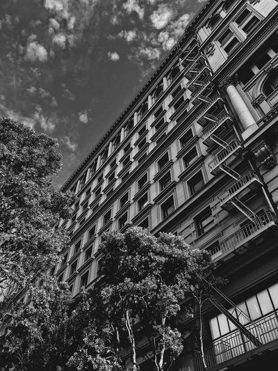 Architecture Building Exterior Low Angle View Built Structure Day Tree Outdoors Sky Window No People Growth City San Francisco Building Blackandwhite Travel Destinations Cloud - Sky Arts Culture And Entertainment