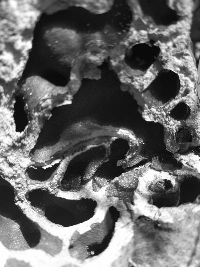 Antplant, detail Weird Ant Plant Plant Part Exotic Plants Blurred Blackandwhite Black And White Black & White Plant Life Full Frame Close-up Abstract Backgrounds Textured  Color Gradient Textured Effect Backgrounds Smudged Plant Bark Shape Rough Abstract Marbled Effect Pattern