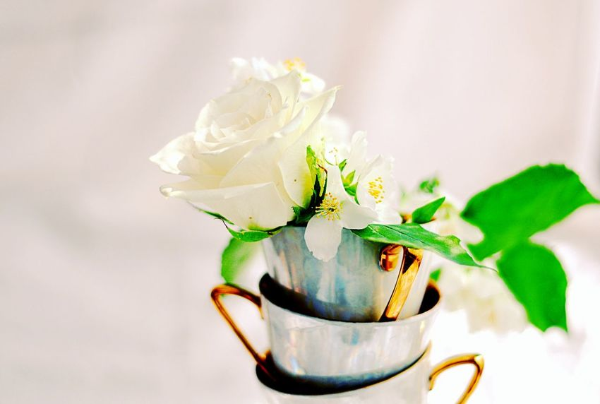 White rose in memories Flowers Flower Rose🌹 White Rose Love Roses Love Like4like Followme White Natural Beauty Beautiful Beauty Tones Flowers_collection Flowers And Roses Happy Time TeaCup Tea Time Cup Drink Tea Sunny Day Nice Day Memories Memory Moments