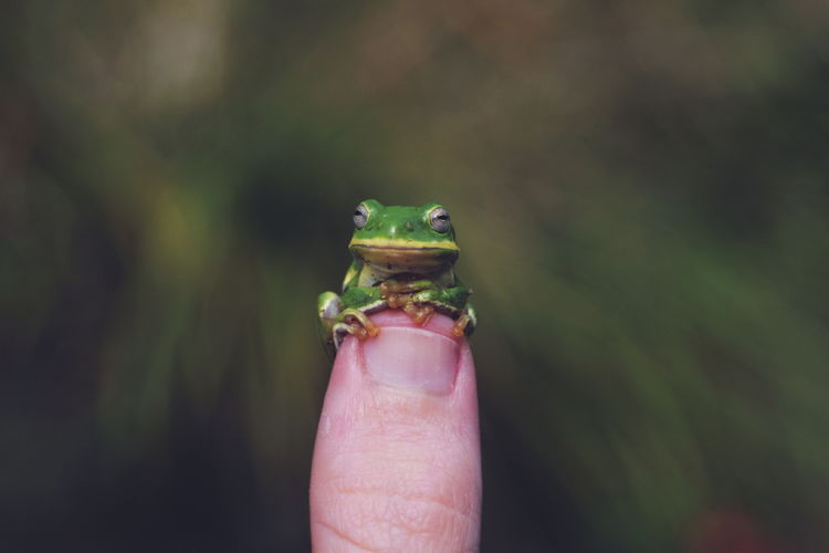 Close-Up Of Frog On Human Finger