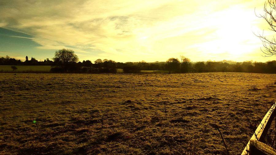 Cold Winter Wrapupwarm Needhottea Icy Sunshine Noedit Beautiful