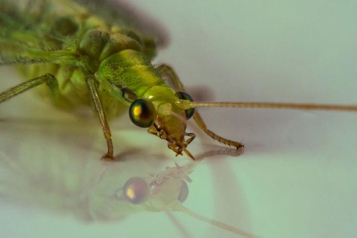 Bug Nature Closeup Close Up Macro Macro Photography Macrophotography Wildlife Insect Close-up
