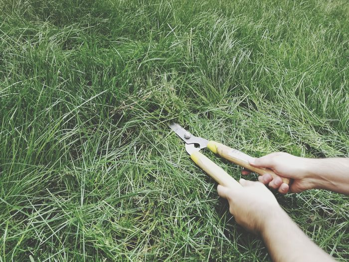 Grass Sissors