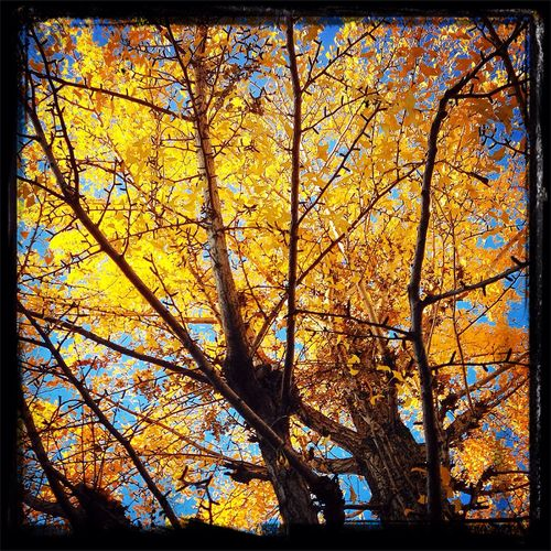 Nature #tree #yellow