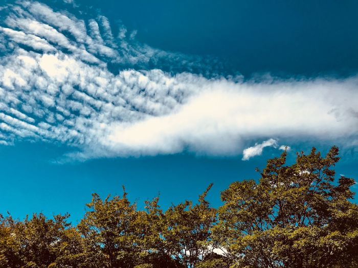 EyeEm Selects Cloud - Sky Sky Tree Plant Beauty In Nature Nature No People Scenics - Nature Growth Tranquility Day Low Angle View Outdoors Tranquil Scene Idyllic Non-urban Scene Blue Sunlight Environment