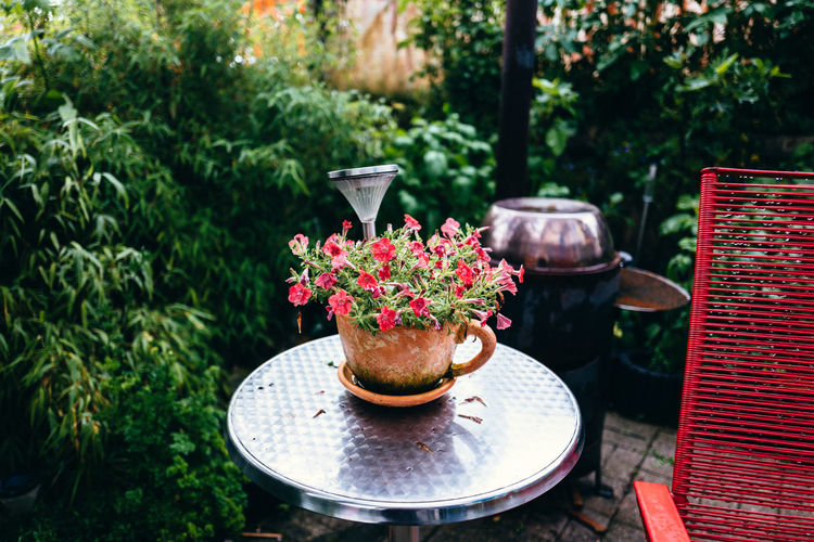 Beauty In Nature Blossom Close-up Day Flower Flower Pot Focus On Foreground Fragility Freshness Front Or Back Yard Green Color Growth In Bloom Nature No People Outdoors Petal Pink Color Plant Potted Plant Tree