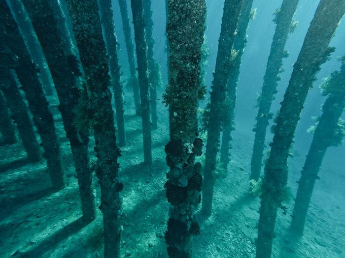 Close-up of trees growing in sea