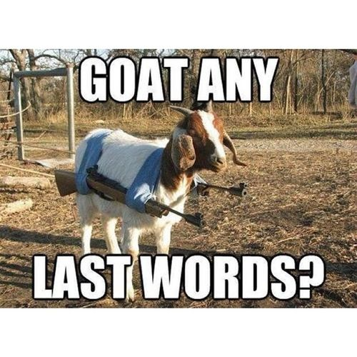 So many goat pics recently... ThisIsGoatingOutOfHand