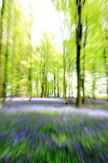 Need For Speed Forestwalk Bluebells Running Forest Photography Trees WoodLand Abstract Motion Motion Blur Living Motion Eye Tricks Leading Lines Leading Pivotal Ideas