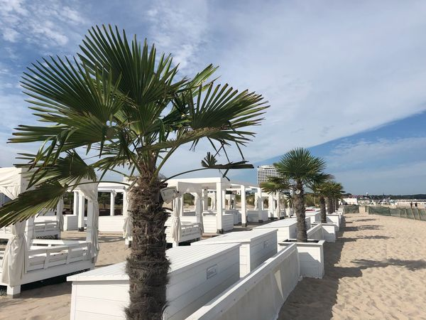 Beachphotography Summertime Summer Baltic Sea Warnemünde IPhone X Photography IPhone X Sealife Palm Sky Plant Tree Nature Cloud - Sky Built Structure Architecture Palm Tree Tropical Climate Growth Sunlight Outdoors Day Building Exterior Beauty In Nature No People Building City Tree Trunk Trunk