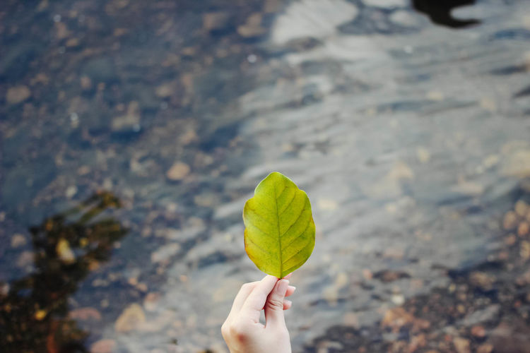 human hand holding leaf top view placed on water textured blurred background Beach Close-up Day EyeEm Best Shots Focus On Foreground Food Frozen Food Holding Human Body Part Human Hand Ice Cream Ice Cream Cone Leaf Nature One Person Outdoors People Real People Top View Women