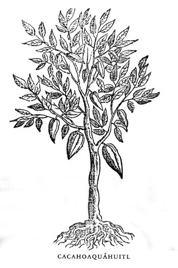 Close-up of text on plant against white background